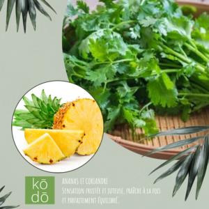 Ananas coriandre – 50hrs